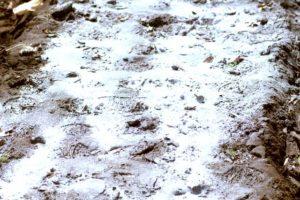 畑に石灰をまいた写真