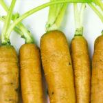 人参の育て方。畑・プランターで上手に発芽するポイント