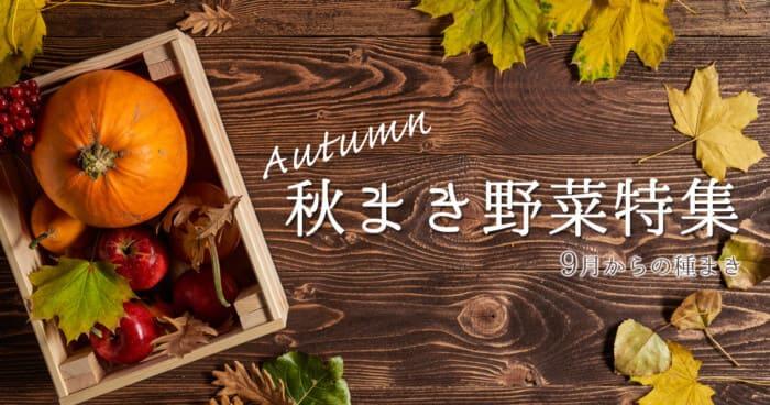 秋に種まきする野菜特集!