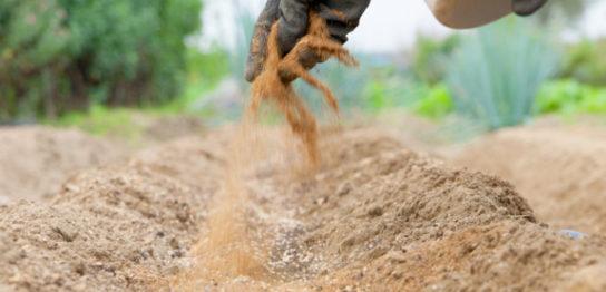 肥料の施し風景