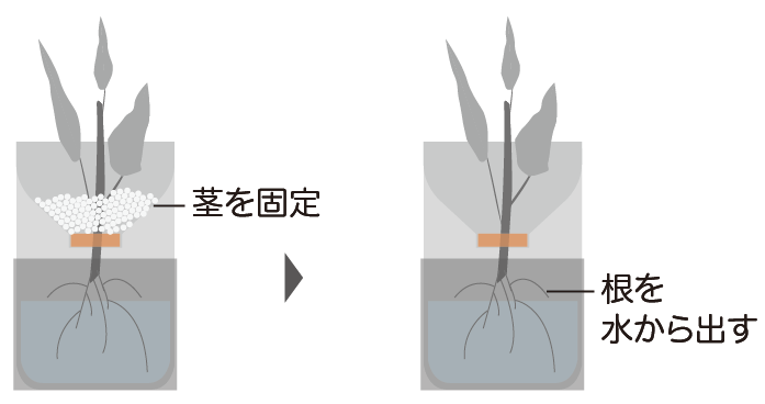 ペットボトルの茎の固定方法