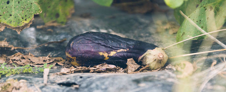 野菜の病気対策と予防