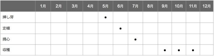 食用菊の栽培スケジュール