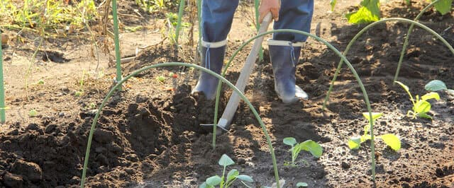 堆肥を畑に施している様子