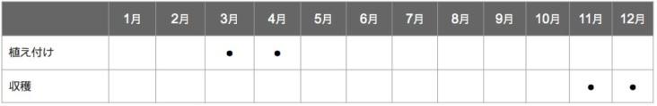 ヤーコンの栽培スケジュール