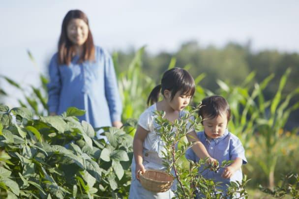 親子で野菜の収穫中